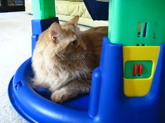 Jasper hanging out in the exersaucer