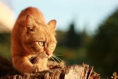 cats_640_62