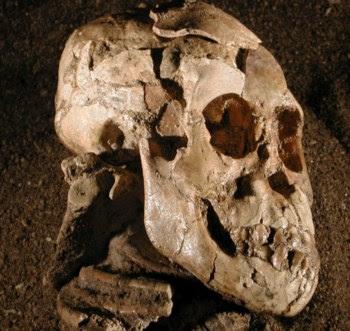 Fóssil de Selam, uma menina australopiteca de três anos de idade
