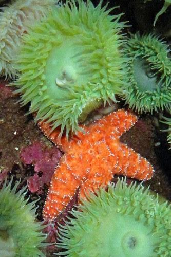 Oregon Coast Aquarium 10