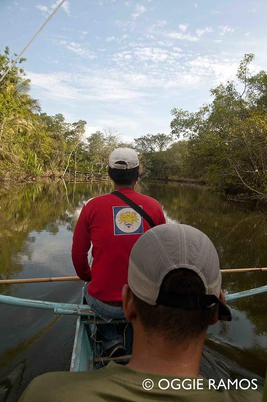 Culion - Kabulihan Mangroves I