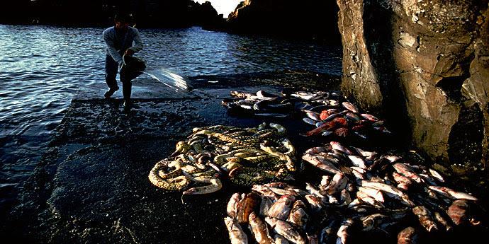 Fischfang Azoren