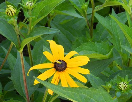 todayflowersDSCN7318