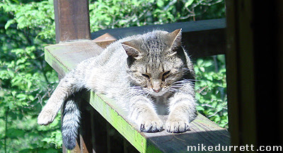 Morty the Cat takes a nap in the sunshine.