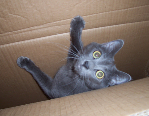 Boxed Wobbles 1
