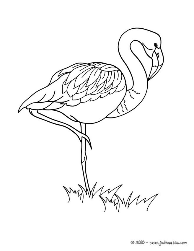 Coloriage Dessin Flamant Rose Facile Coloriage Ideas