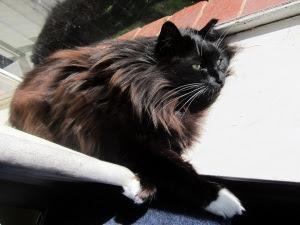 sunbathe-cat-1