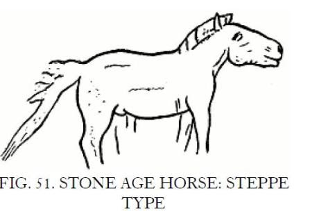 Stone Age horse from Europe Ewart p. 363