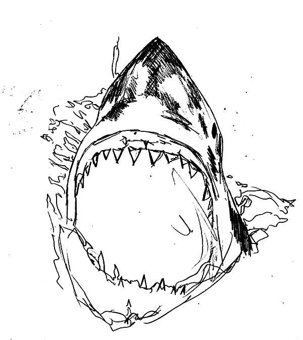 Bull Shark Drawing at GetDrawings | Free download