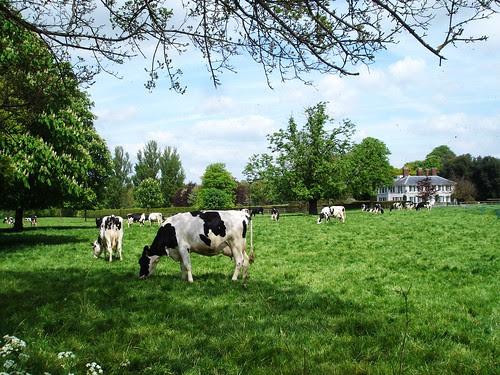ashwell dairy