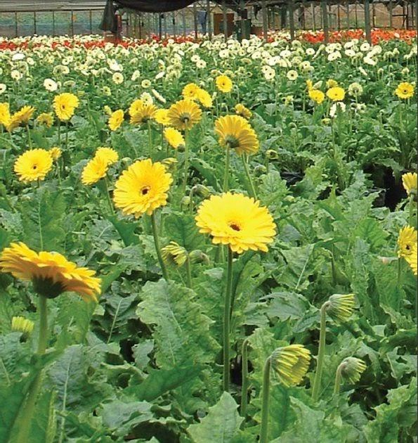 Flower Exporters In Sri Lanka