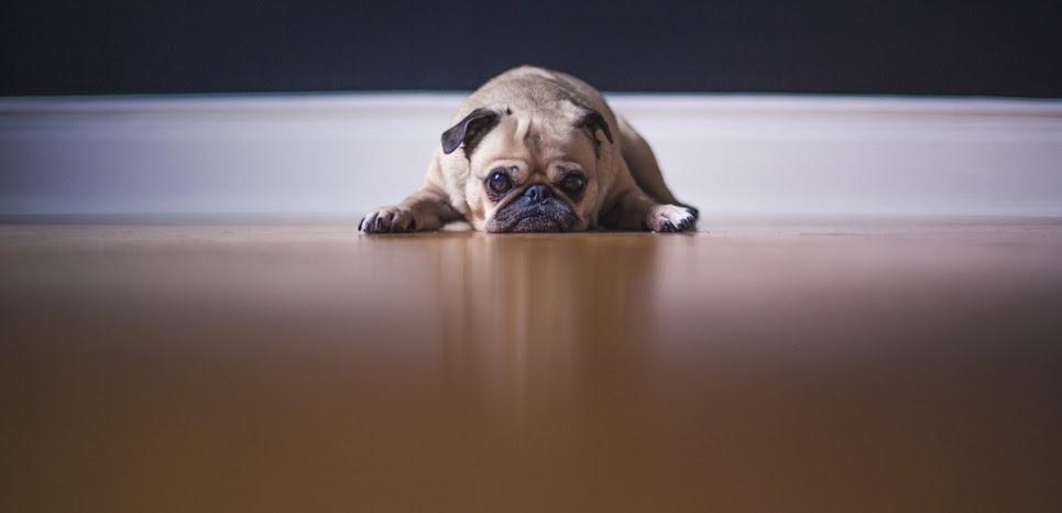 """Psychiatre vétérinaire : """"Les chiens aussi dépriment. Et guérissent !"""""""