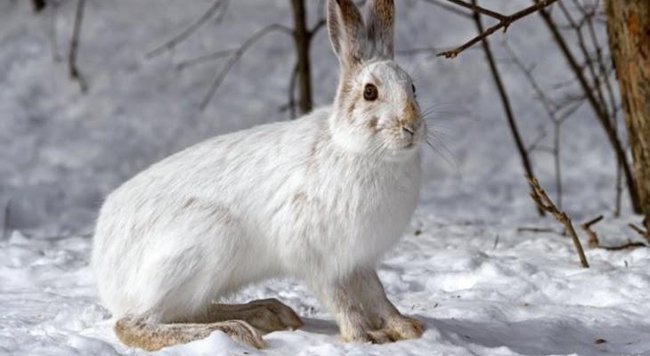 В Челябинске смелый заяц пришёл в гости к людям