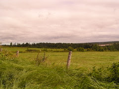 New Brunswick Field 1