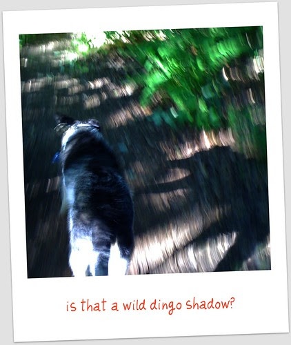 shadow walk three