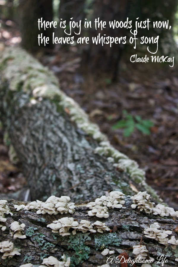 Quotes About Walk In The Woods 37 Quotes