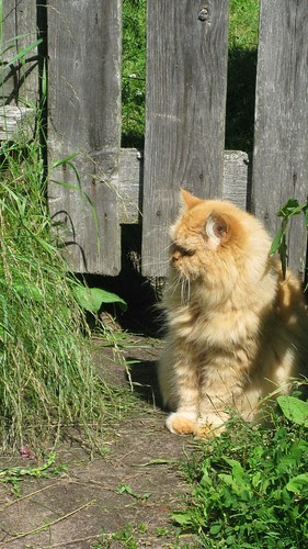 Kissa Inkerinmaalta by Anna Amnell