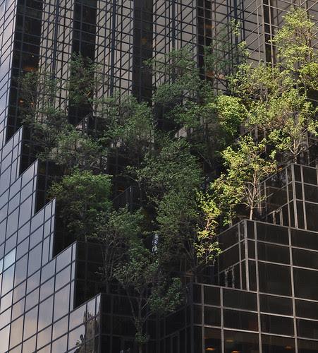 Trump Tower Trees