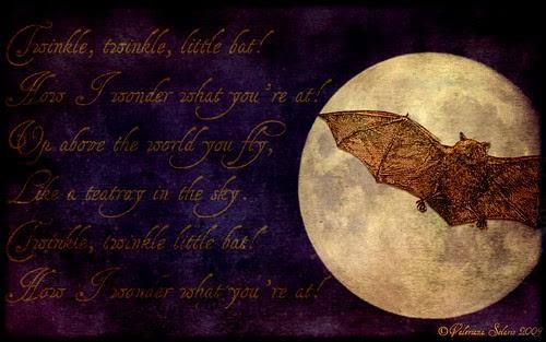 Twinkle, twinkle, little bat