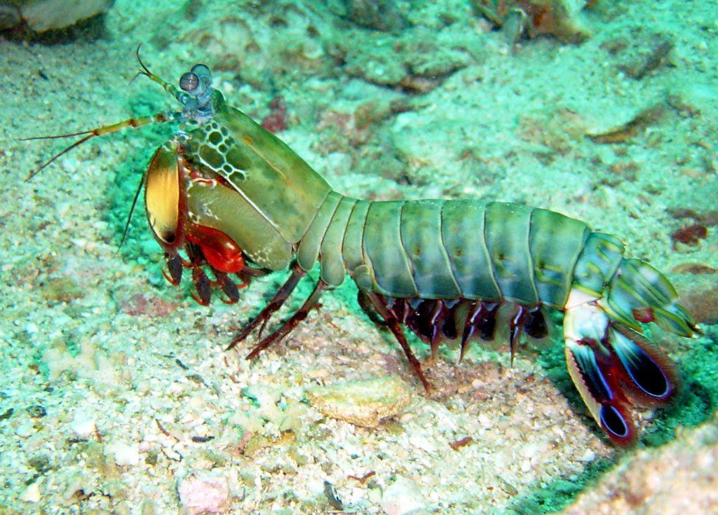 6500 Gambar Binatang Laut Dan Namanya Terbaik