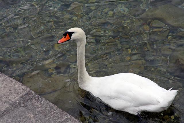 Lago di Como (105)