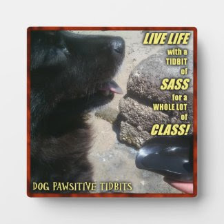 Sassy Dog's Life Display Plaques