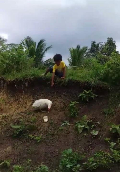 Un amable patito ayuda a un preocupado niño que perdió su sandalia tras caer por una colina