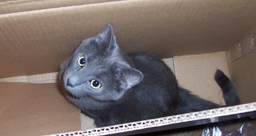 Boxed Wobbles 3