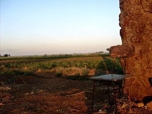 Estimular aún más al campesino podría contribuir a aumentar los bajos niveles de producción. Foto: José Raúl Concepción/Cubadebate.