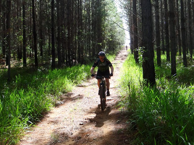 Riding Through the Pine Forest