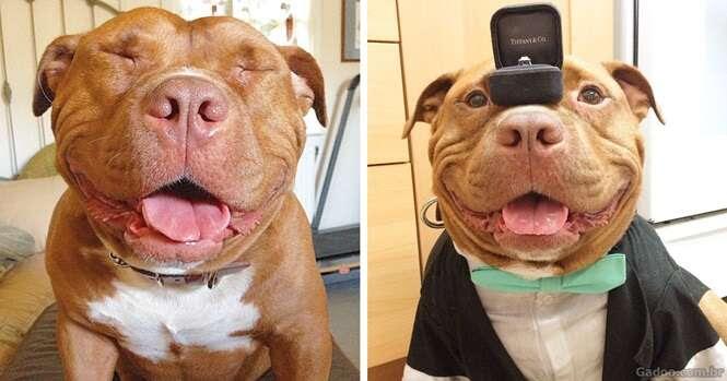 Esse cão não consegue parar de sorrir após ter sido resgatado de um abrigo