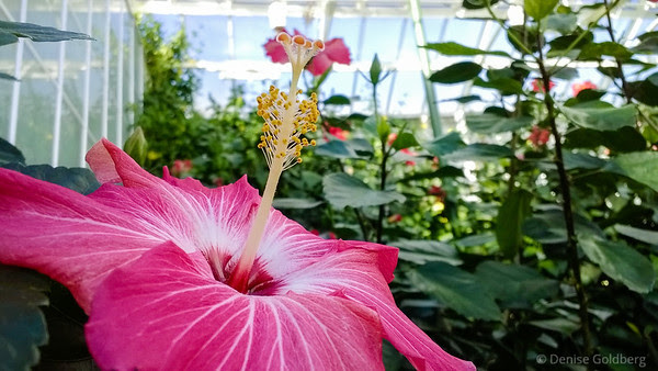 flower perfection, Longwood Gardens