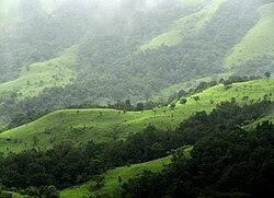 Shola Grasslands and forests in the Kudremukh National Park, Western Ghats, Karnataka.jpg
