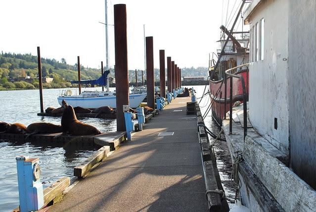 Sea Lions on the docks - Astoria, Oregon