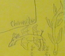 ornithids