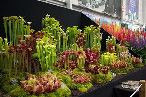 2014 RHS Chelsea Flower Show   WM EventsWM Events