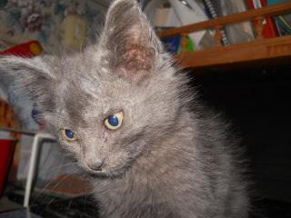 Mimi as a Kitten