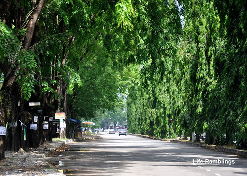 Road surrounded by lush greenery