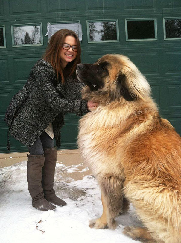 30. Would you like to imagine such a pet?  the size of the dog