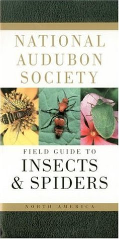 National Audubon Society Field Guide To Insects And Spiders North America National Audubon Society Field Guides