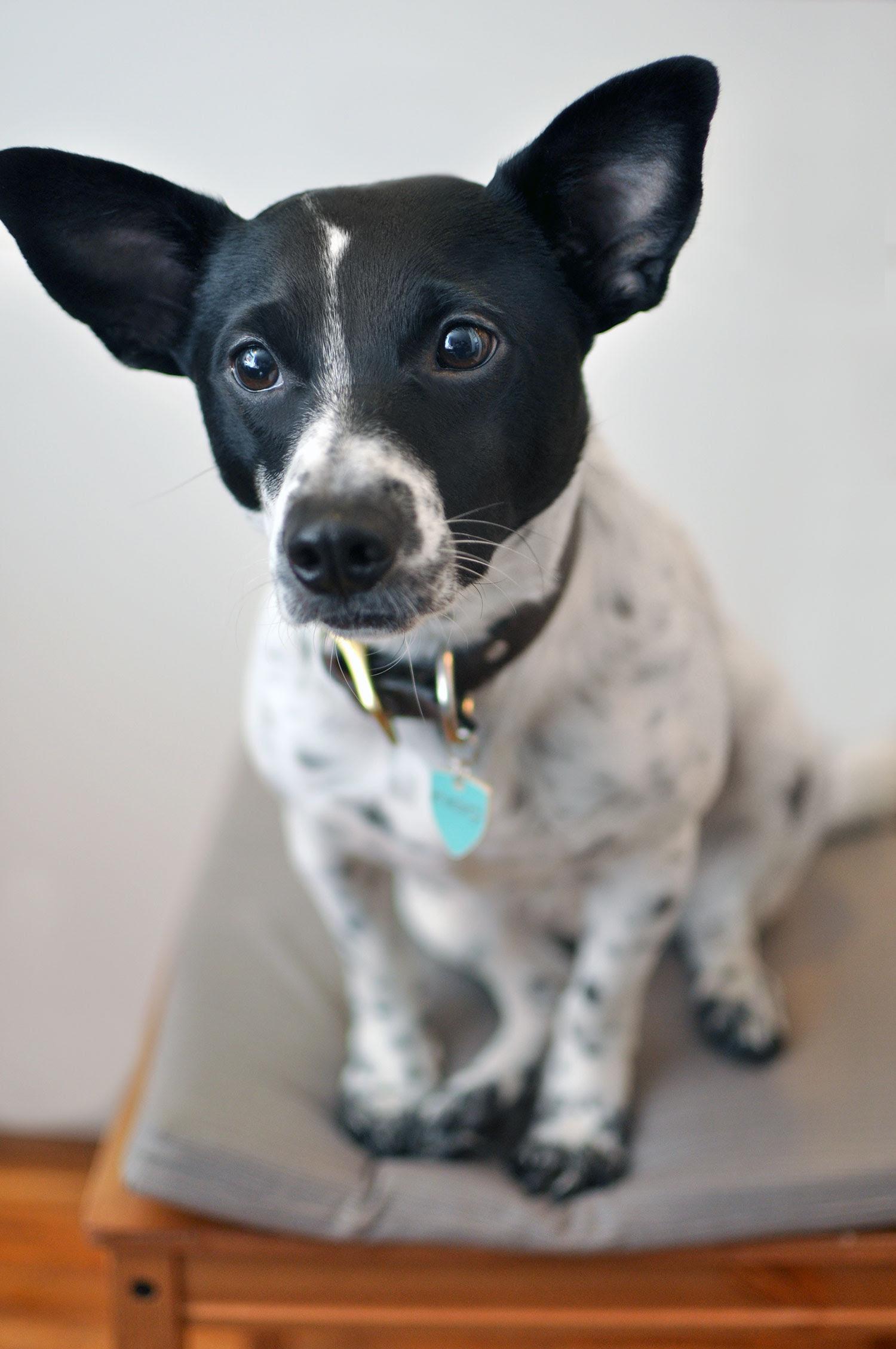 Figo Pet Insurance: Our Partnership + Exclusive DISCOUNT ...