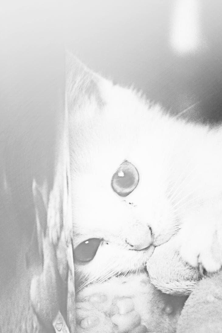 http://th03.deviantart.net/fs71/PRE/i/2012/265/7/8/cat_bw_by_lexandra13-d5fjm3y.jpg
