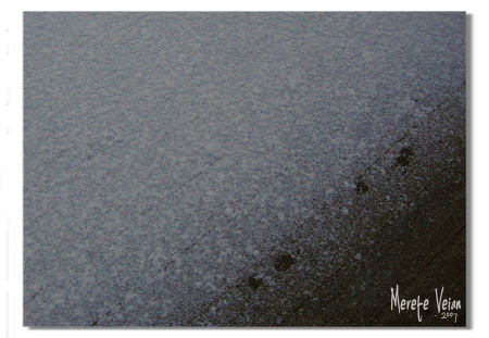 first of snow :: første snø