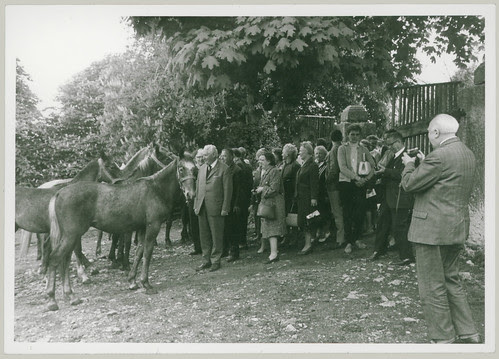 Man with a camera and horses