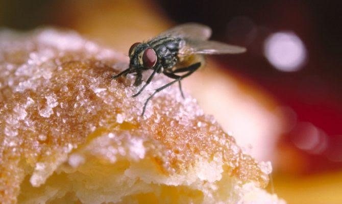 Προσοχή: Δεν φαντάζεστε τι συμβαίνει όταν μία μύγα κάθεται στο φαγητό σας!