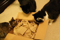 What's in the box? Smells like nip!