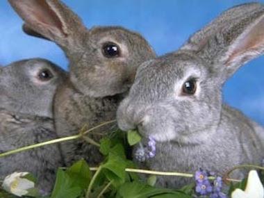 La Alimentacion del conejo