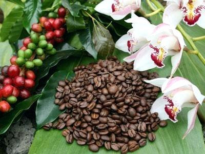 A Newbie S Guide To The Best Hawaiian Kona Coffee