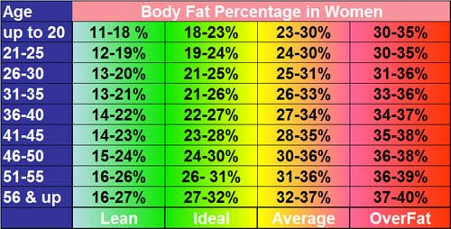 Image result for body fat percentage
