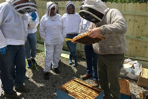 Urban Beekeeping Creating Environmental Buzz in Pittsburgh